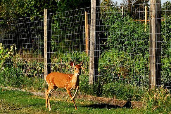 25 Ideas for Decorating your Garden Fence DIY Garden fencing