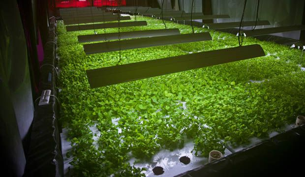 the plant, une ferme intelligente