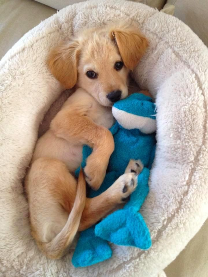 16 Dogs Who Are Best Friends With Their Stuffed Animals Cute Animals Puppies Cute Puppies