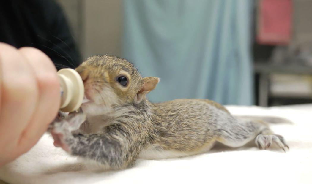 Mmm Milk Baby Squirrel Squirrel Can Dogs Eat Oranges