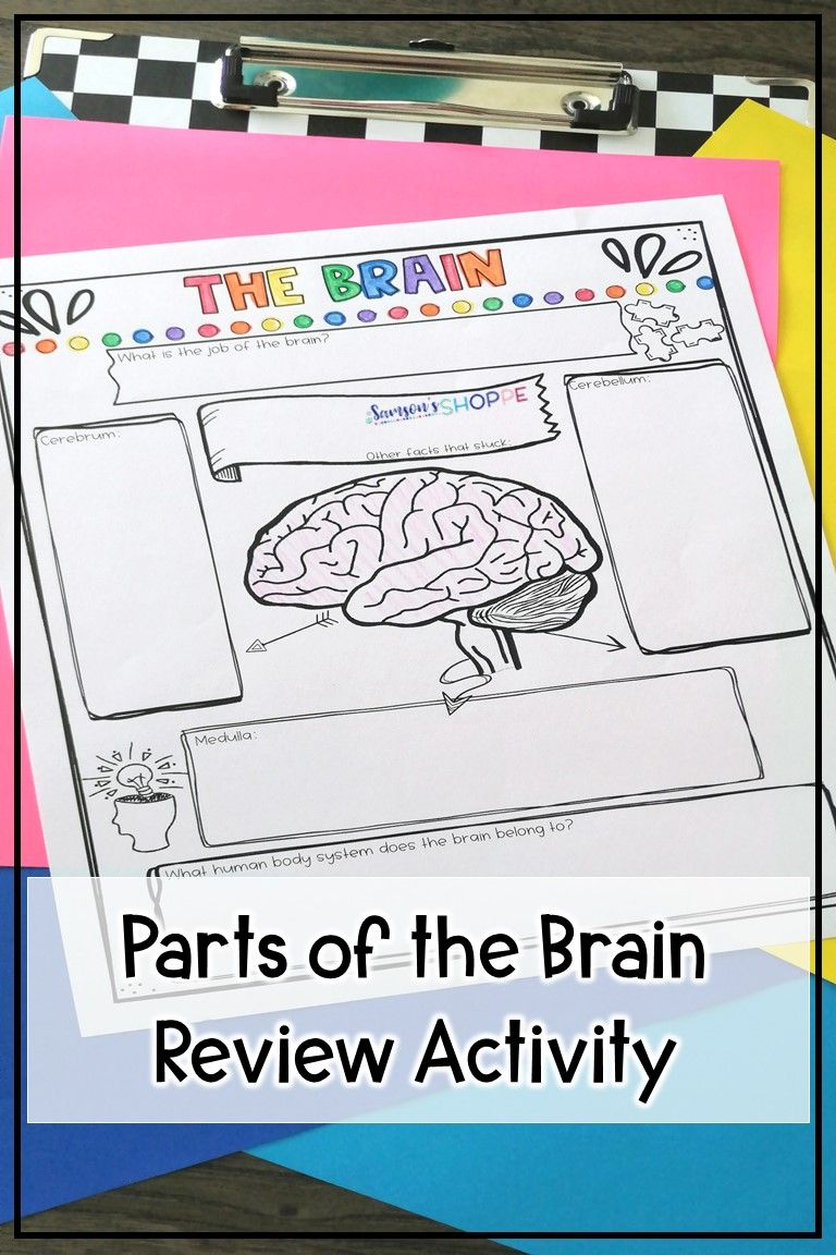 Parts of the Brain Nervous System Drawings and