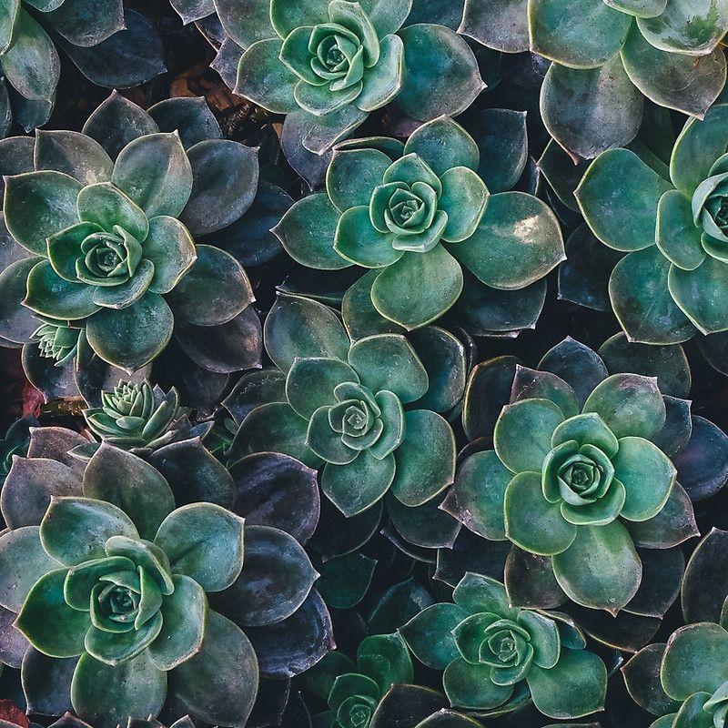 Succulent Plants Nature Fine Art Photography 0038 Mini Skirt In
