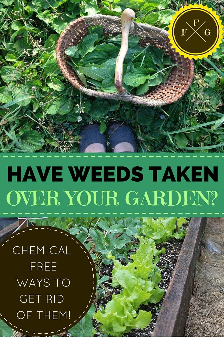 What To Do When Weeds Have Taken Over Your Garden ~