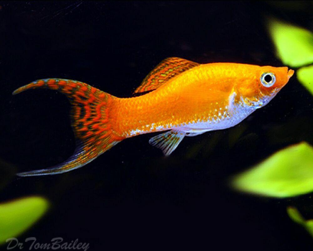 Tropical Fish Supplies Online