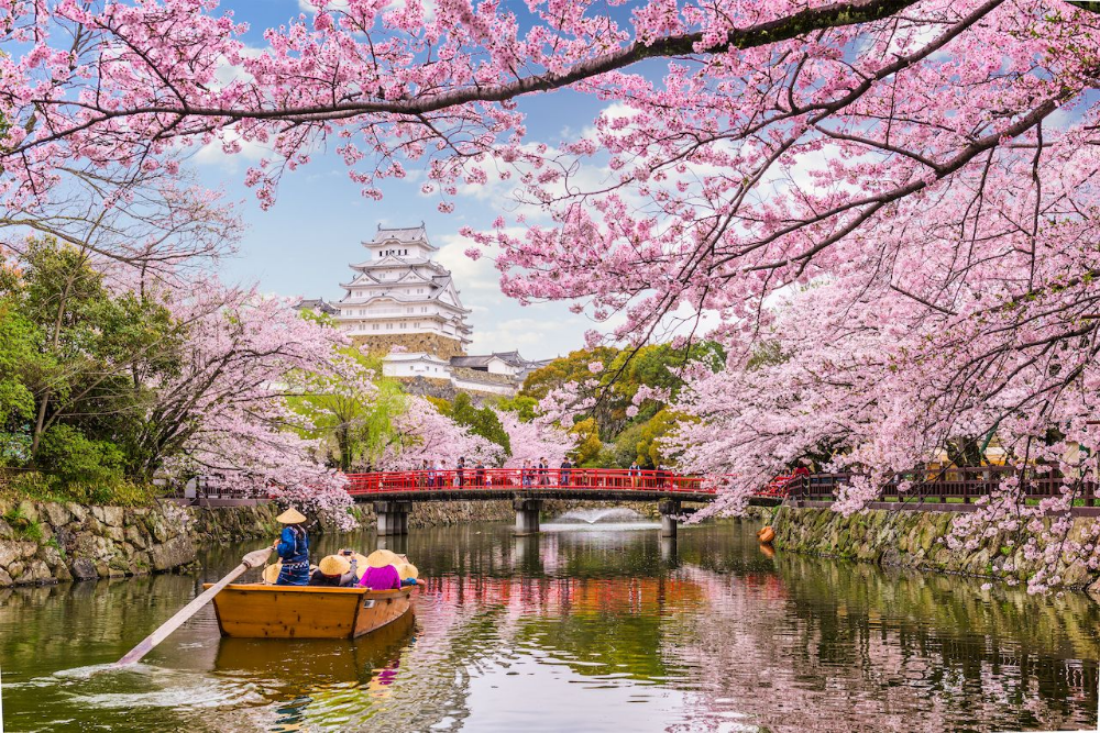 Everything You Need To Know About Japan S 2020 Cherry Blossom Season Cherry Blossom Japan Japan Cherry Blossom Season Japan Travel