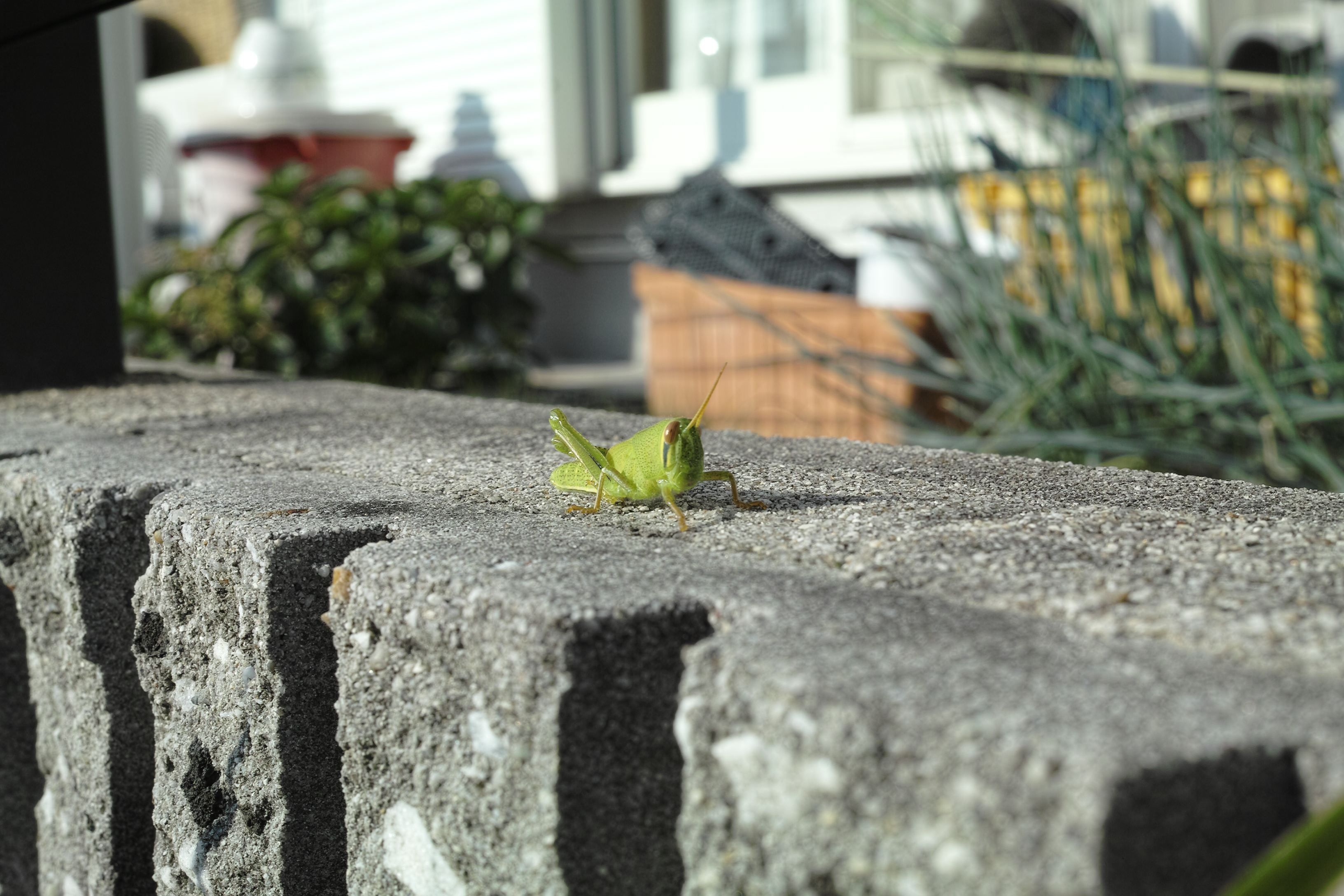 Grasshopper in the parking