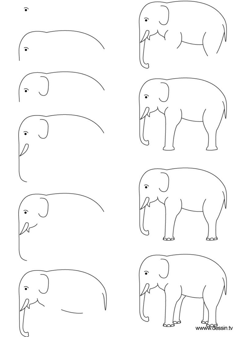 how to draw a realistic elephant step by step