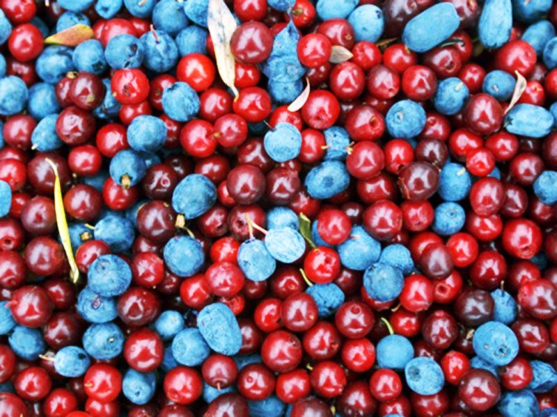 One cup of whole #cranberries has 8,983 total #antioxidant capacity. Only #blueberries can top that: Wild varieties have 13,427; cultivated blueberries have 9,019.