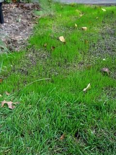 Seed Lime And Fertilize All At Once Reseeding Lawn Overseeding Lawn Lawn And Garden