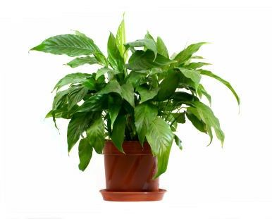 houseplant care a guide to healthy houseplants