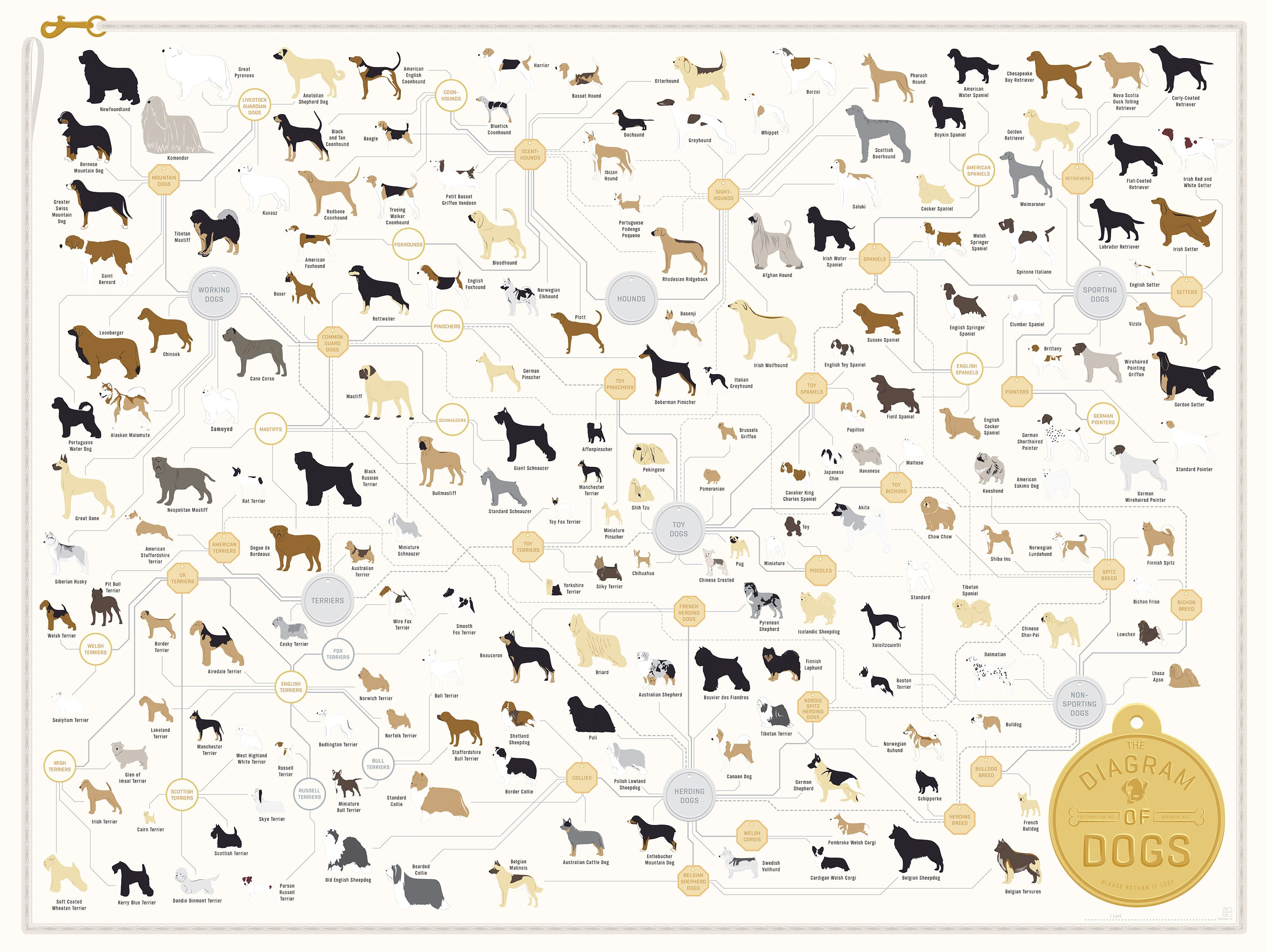 The Diagram Of Dogs Dog Poster Dog Breeds Hand Illustration