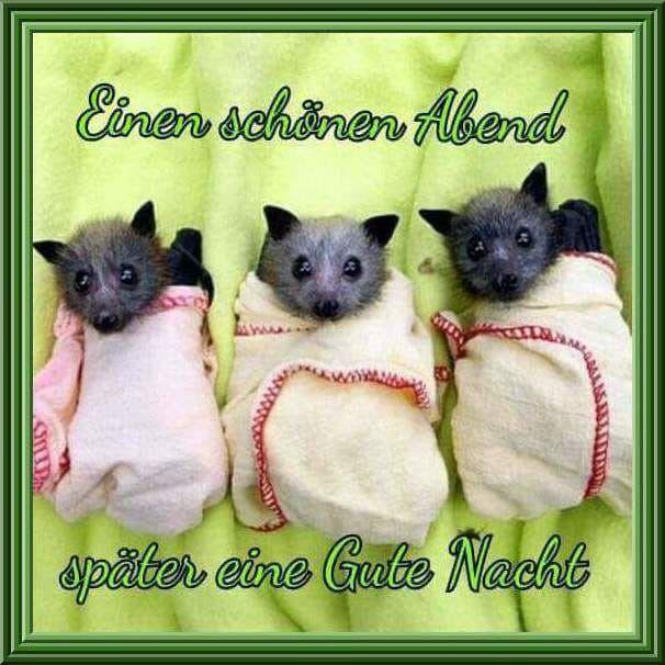 Netzfund   Lustige bilder von tieren, Lustige tiervideos ...