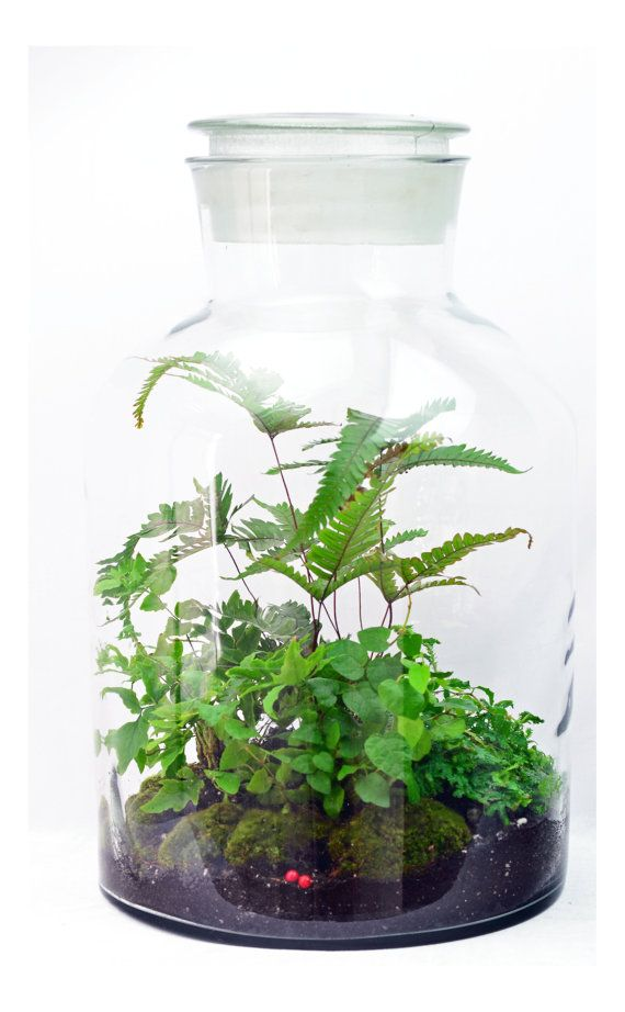 Extra Large Apothecary Vessel Fern Terrarium Live Moss Indoor