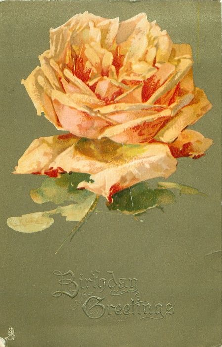 peach/orange rose, at top centre of card, facing up, one stalk
