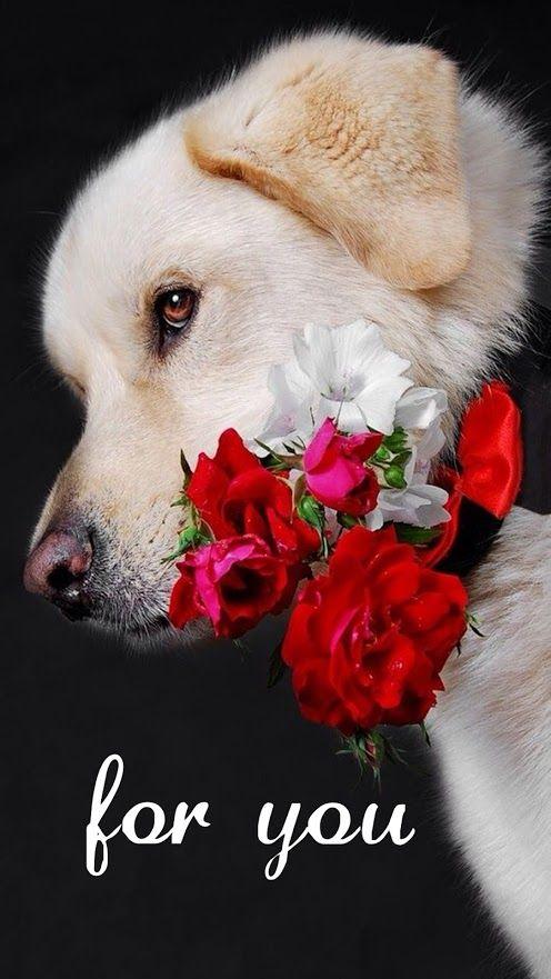 Imagen De Un Perrito Con Flores Para Regalar A Mi Novia Perros Con Flores Imagenes De Perros Animales Feos