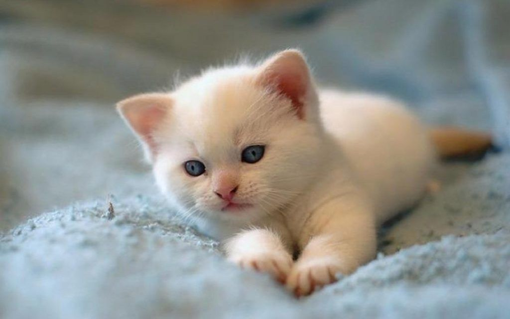 Beautiful Cat Wallpapers Hd Pictures Cute Cat Pictures Hd Wallpapers Cute Baby Cats Kittens Cutest Cutest Cats Ever