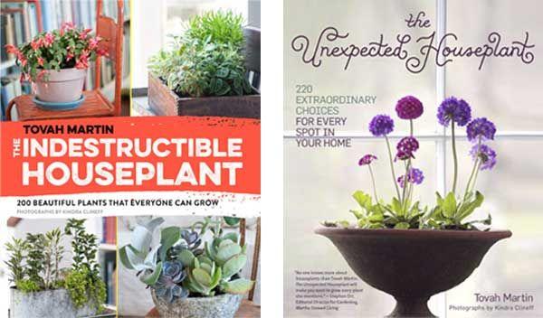 How Often Should I Water My Houseplants? | House plants ...