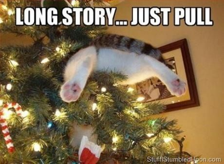 Funny Christmas Meme 2014 : Lool how did tht happen c funny christmas memes
