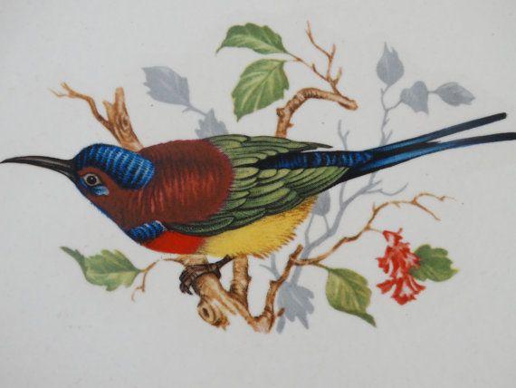 Hey, I found this really awesome Etsy listing at https://www.etsy.com/listing/204125000/carlton-ware-hummingbird-trinket-dish