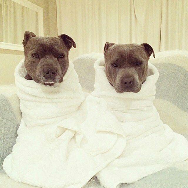 Philip Darren Cute Dogs Puppies Cute Animals Puppies