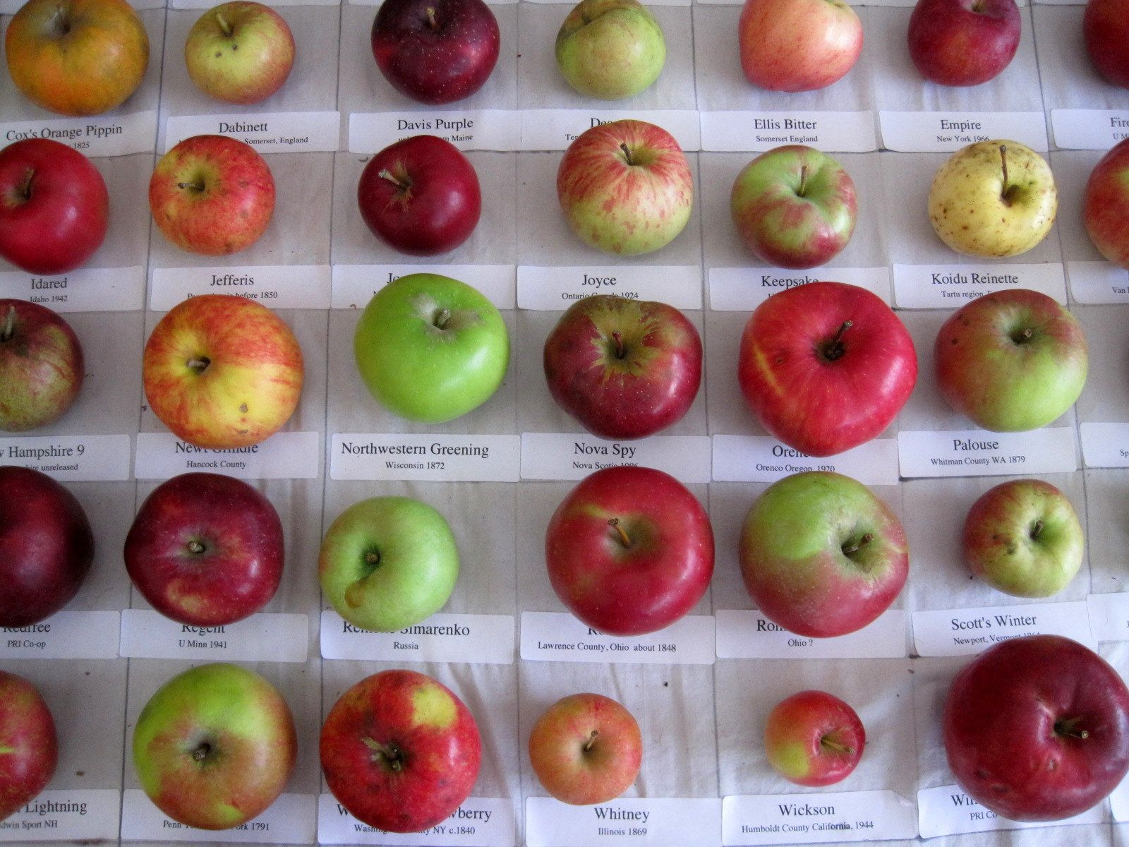 Pin By Robyn Madison On Heritage Apples Apple Varieties Apple Apple Help