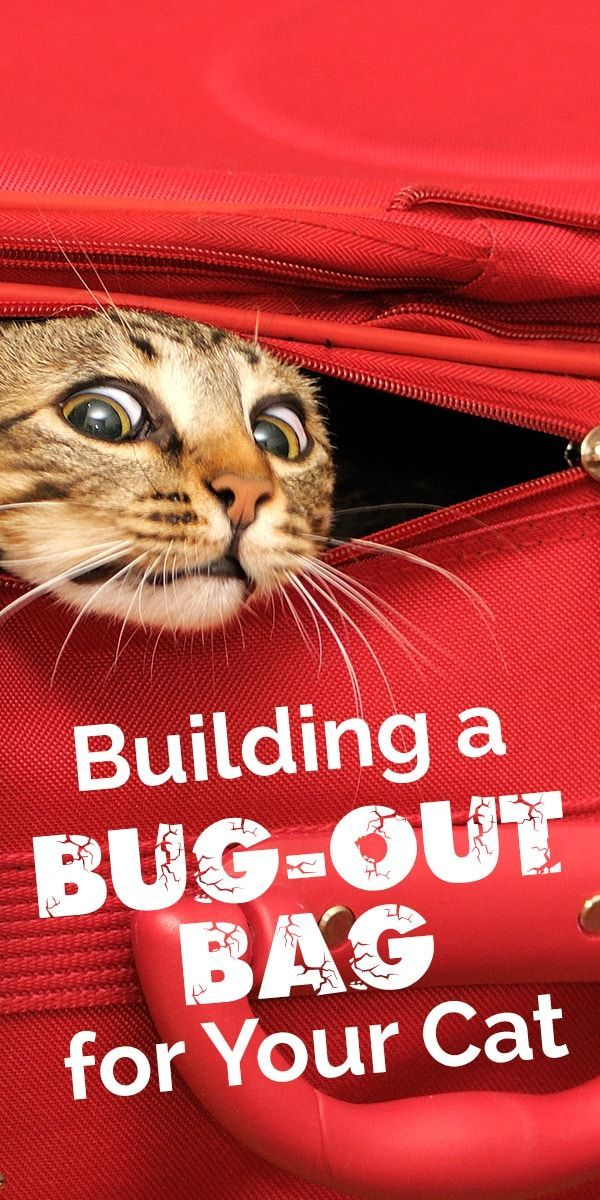Creating a bugoutbag and training your cat to easily get
