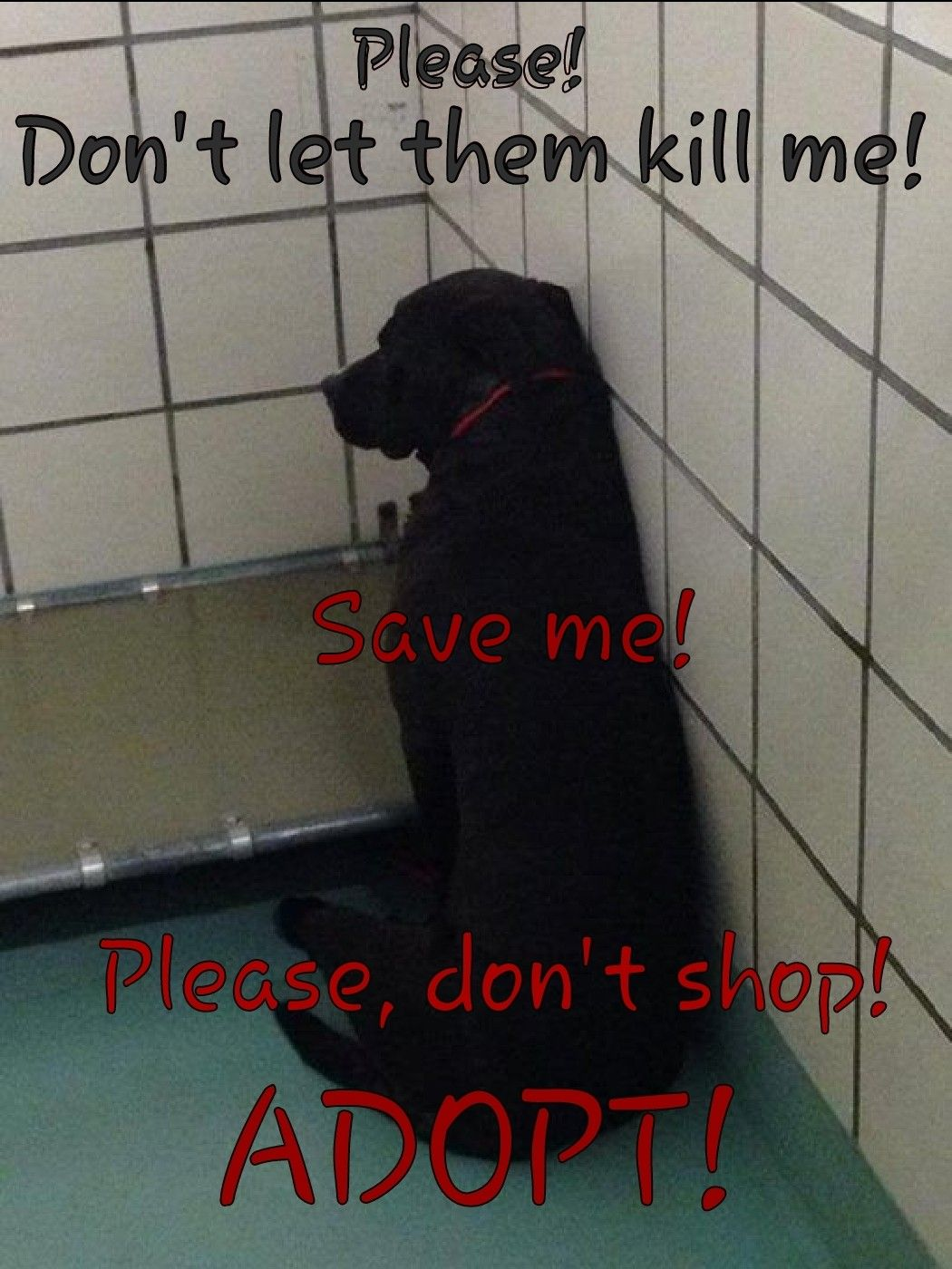 Please Do Not Shop Adopt Go To A Local Shelter To Find Your New Familymember Dog Adoption Pets Animals