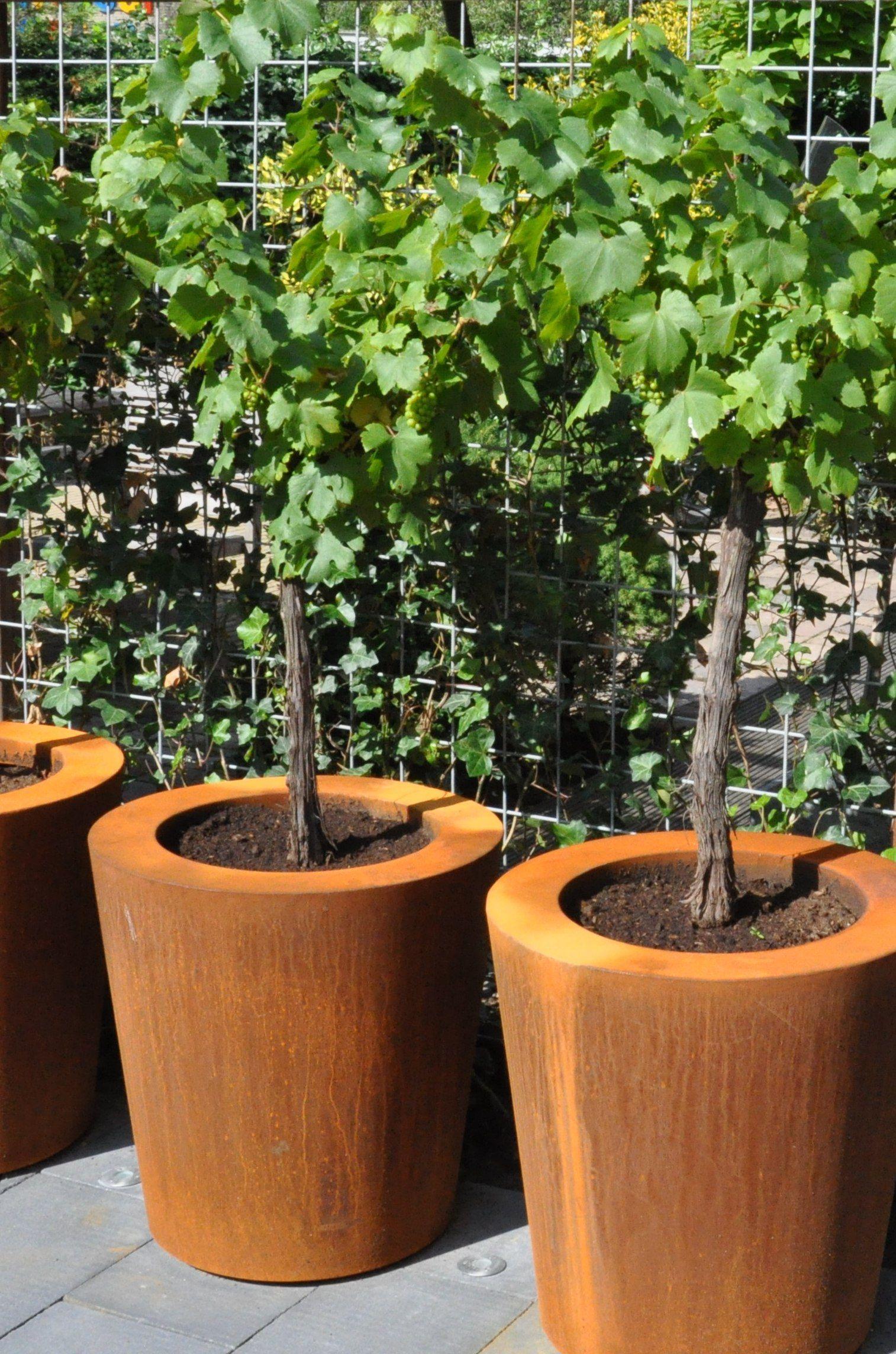 ACCESSOIRES grote plantenbakken van cortenstaal Potmaat
