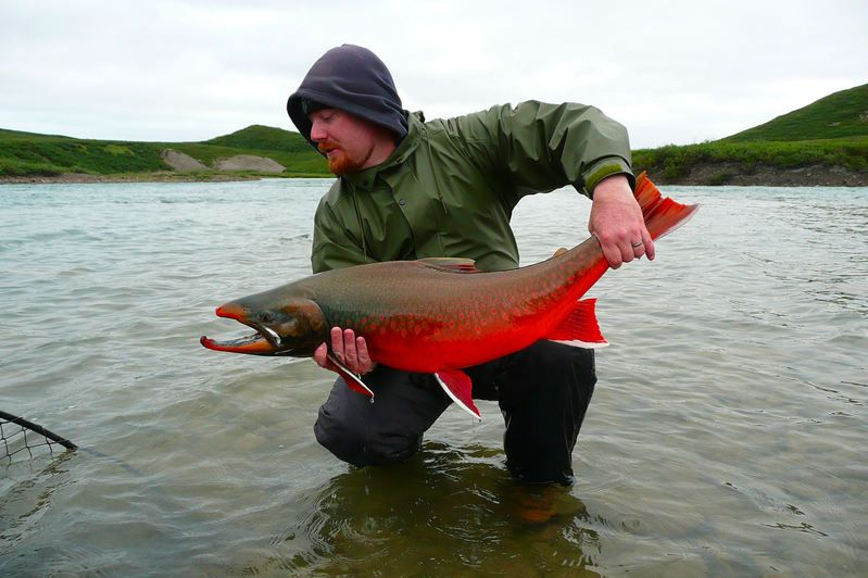 Arctic char fish the incredible arctic expedition for Arctic char fish