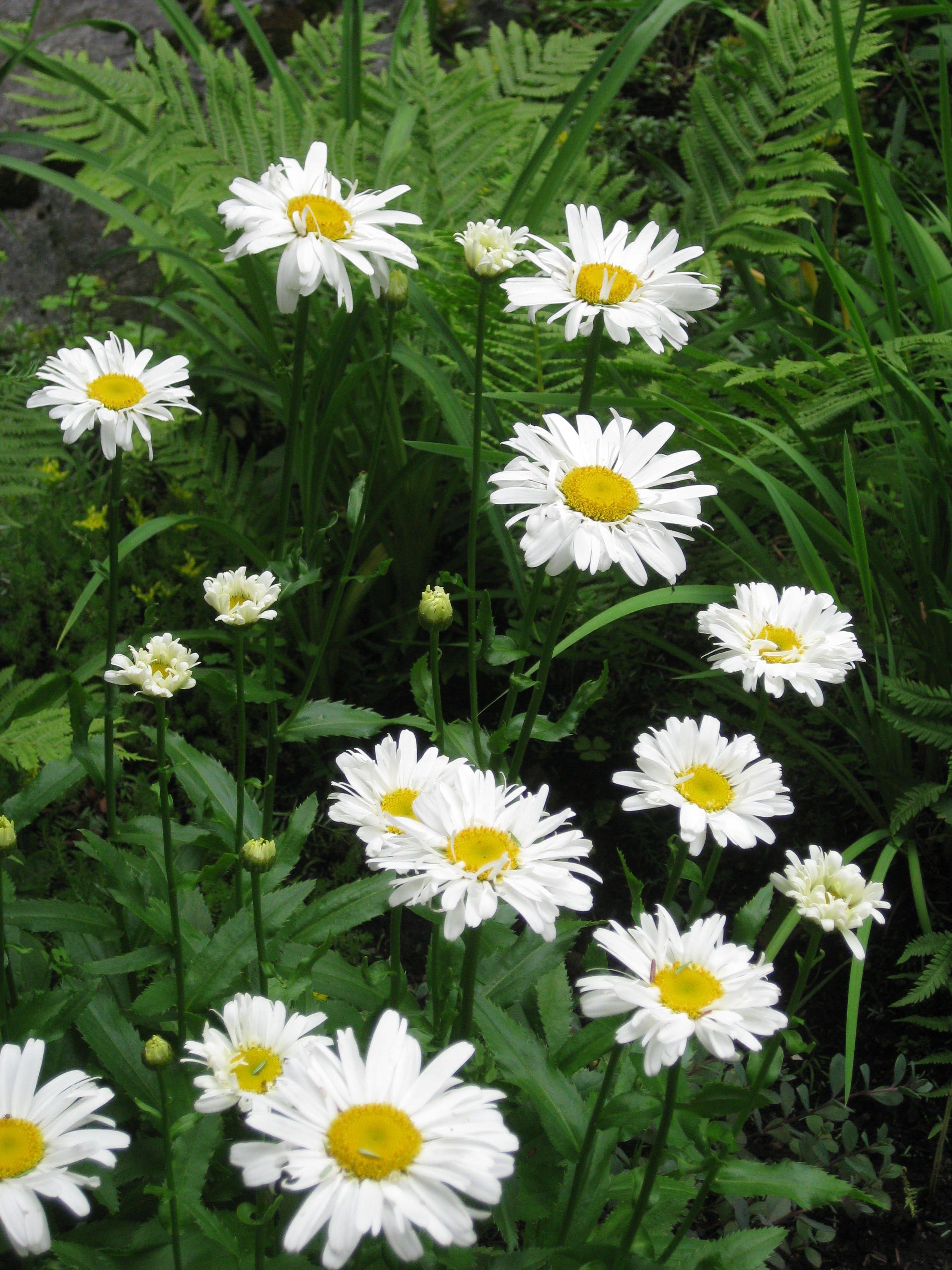 Anybody love daisy.........