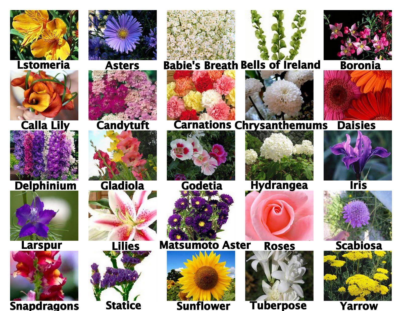 Pin by Oceanside California Flowers on Seasonal flowers by