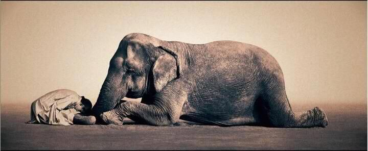The Grateful Teacher. | Gregory colbert, Elephant, Elephant love