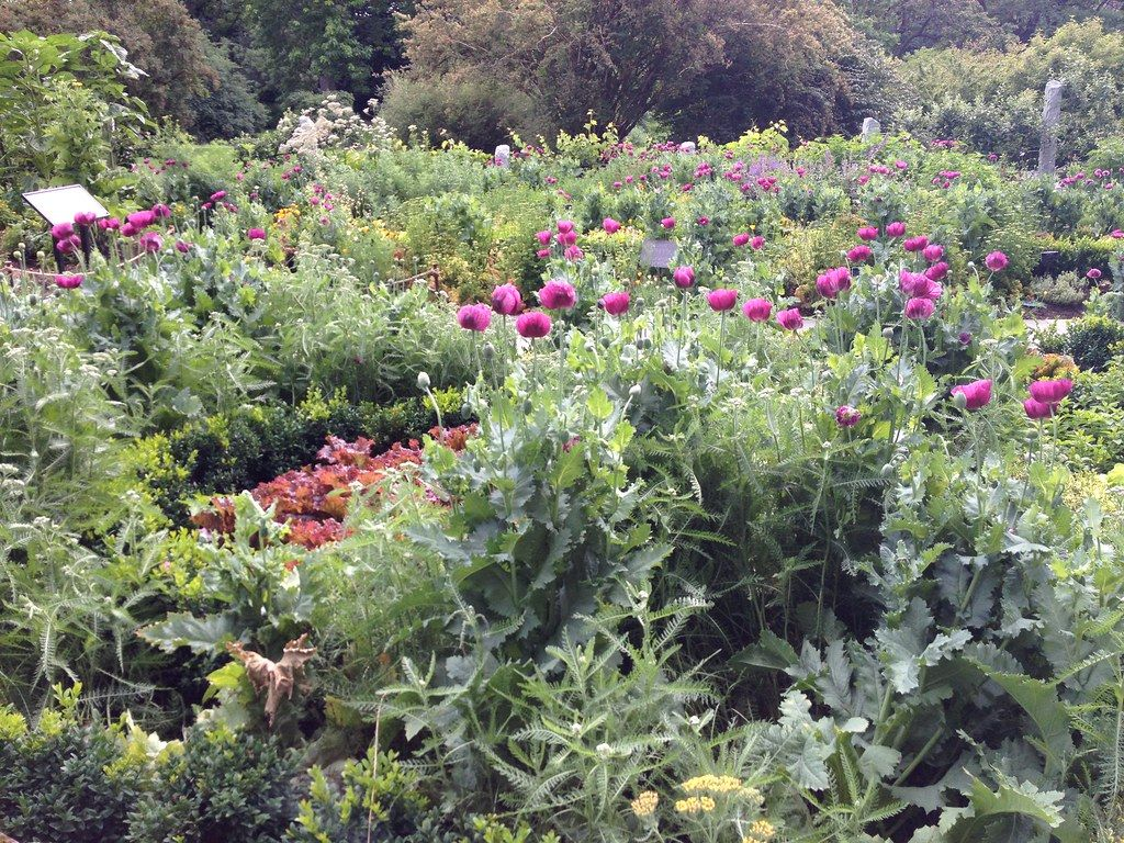 Learn to How to Create a Potager A French Kitchen Garden – Potager garden