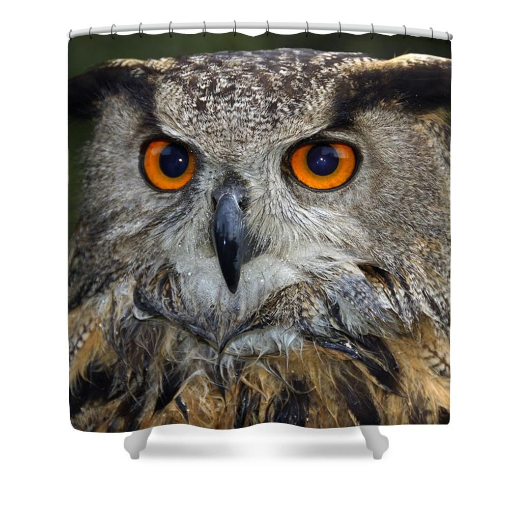 Owl shower curtain a beautiful wet owl with intense orange eyes