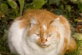 Homemade cat food recipes cat food homemade cat food and cat food recipes require vitamins though and to add to this include diced raw chicken hearts cat factscat food forumfinder Gallery