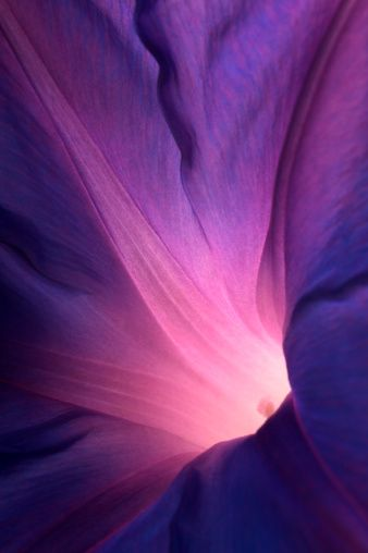 Purple Morning Glory Flower Flower Iphone Wallpaper Iphone Lockscreen Flower Lockscreen