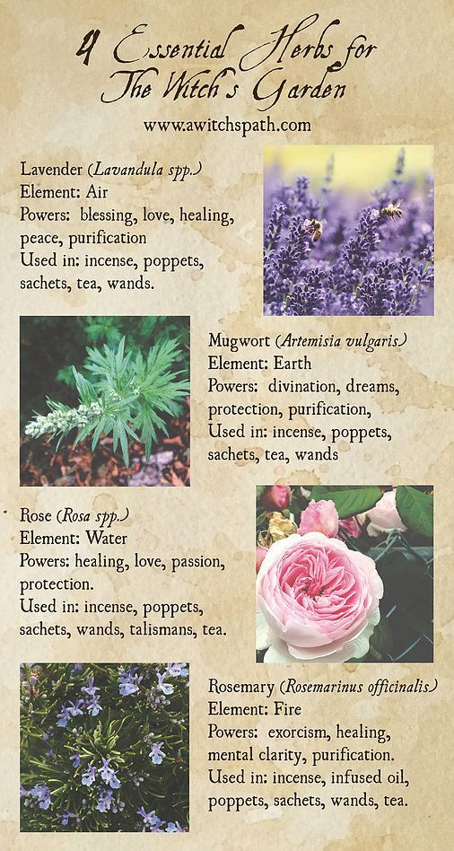 Four Essential Herbs for the Witch's Garden | Green Witchcraft | Portland | A Witch's Path #greenwitchcraft