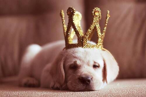 Image result for puppies crown