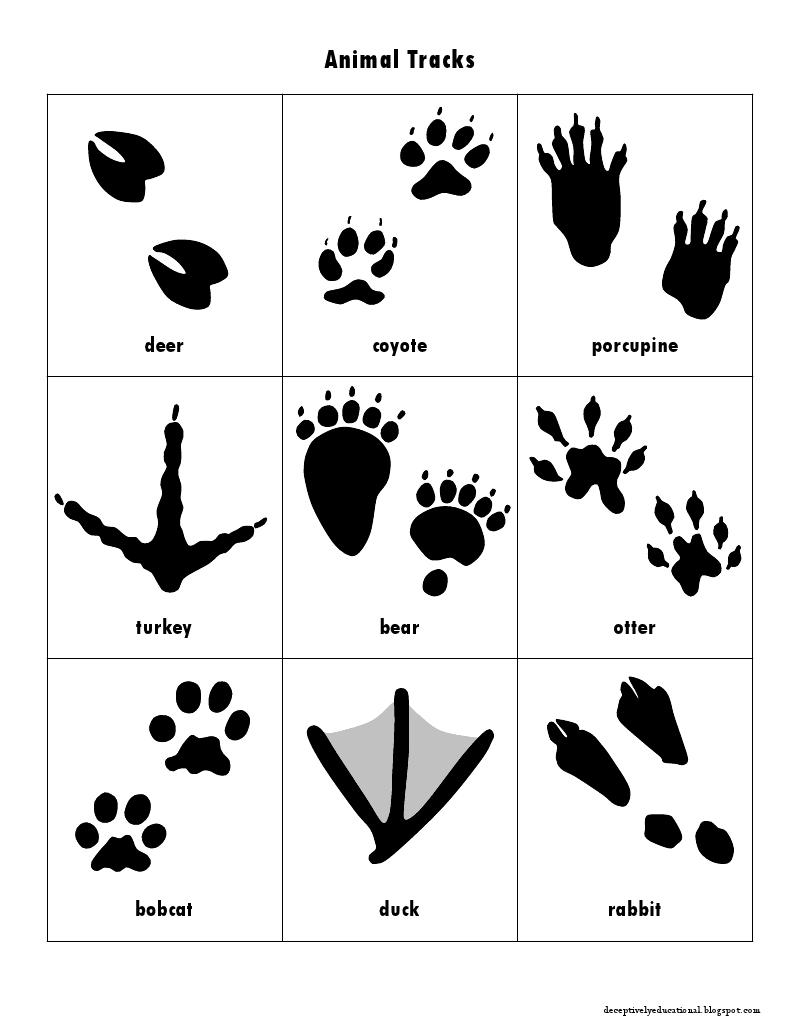 Animal Tracks Animal Tracks Animal Tracks In Snow North American Animals