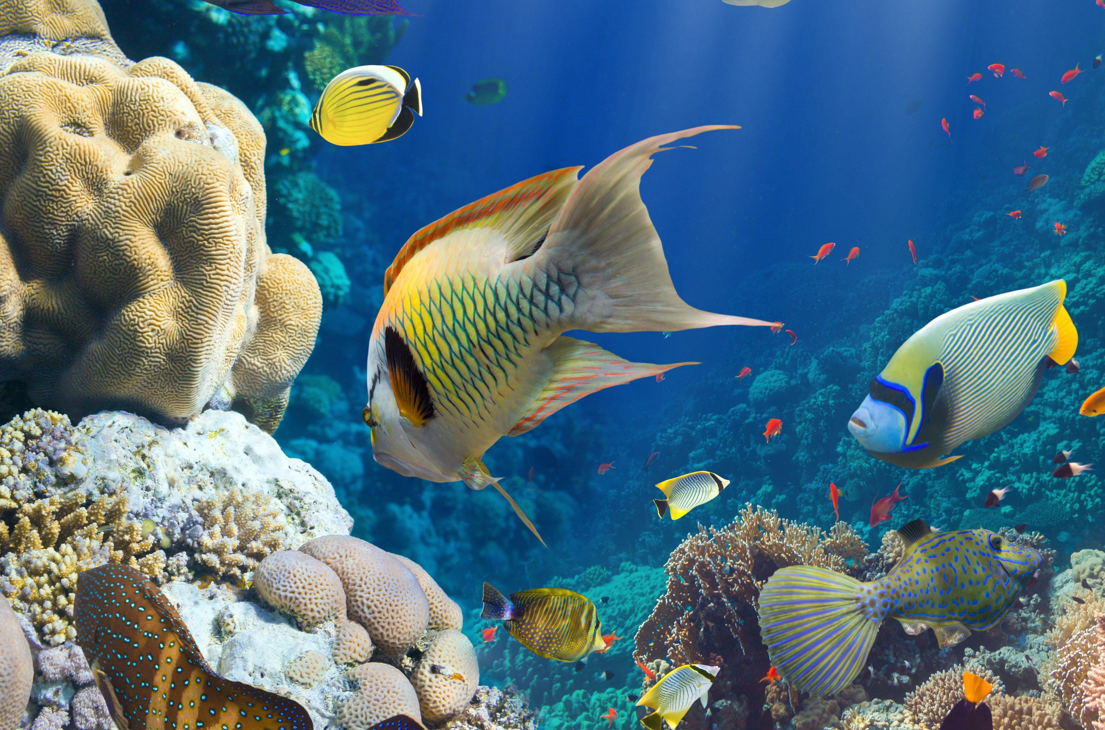 Amazing Fish Underwater Wallpaper Colorful Fish Animals