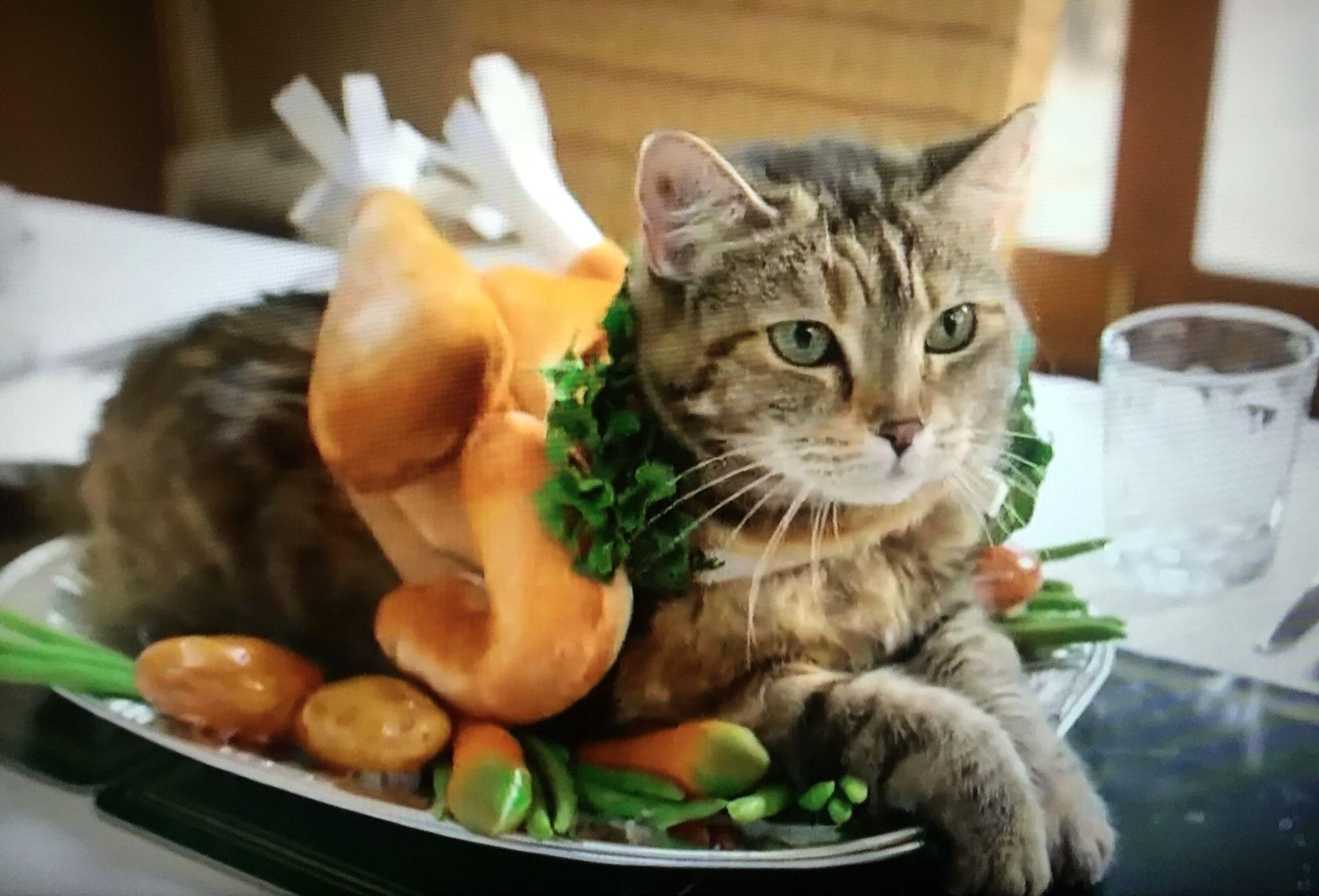 Happy Thanksgiving Pet treats, Cat treats, Cute animal