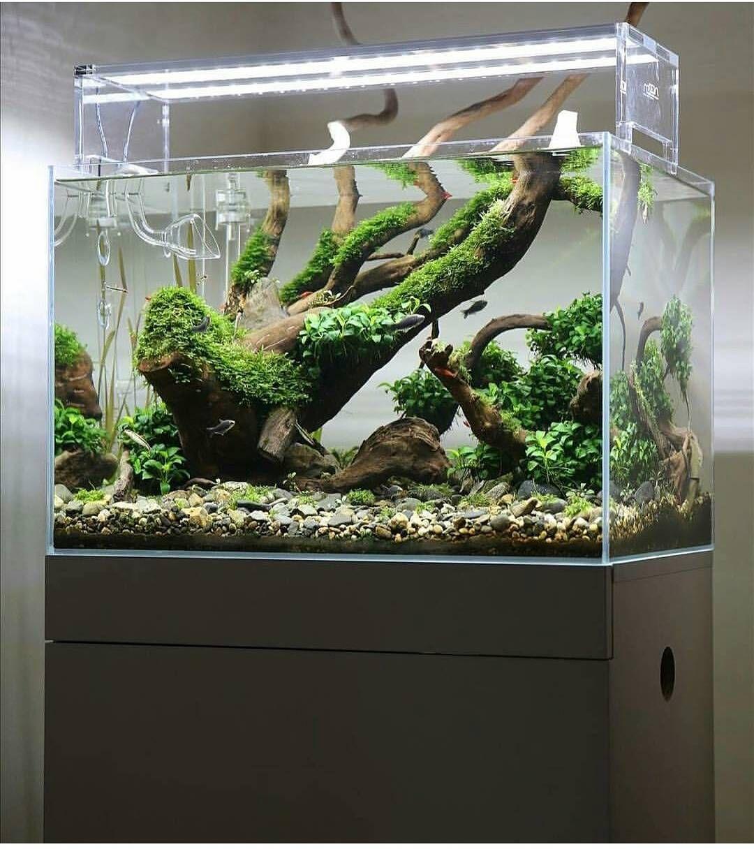 2 244 Likes 10 Comments Aquariumhobbystore Com Aquariumhobby On Instagram What Do You Think Of This Aquasc Fish Aquarium Decorations Aquarium Aquascape