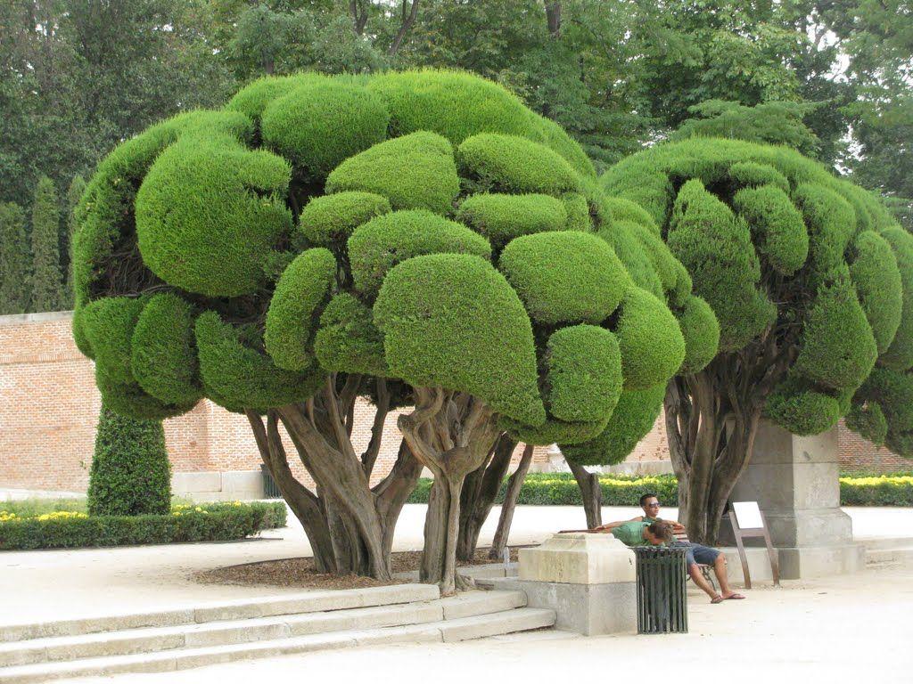Sculpted trees, parque del retiro, madrid, spain #gardendesign ...