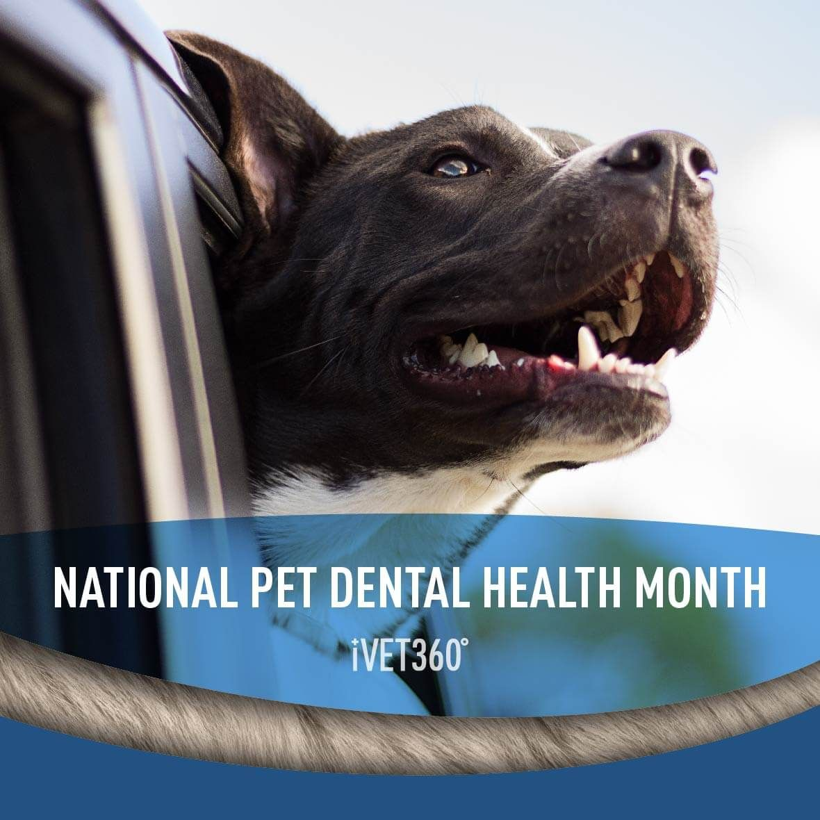 National Pet Dental Health Month Pet dental health month