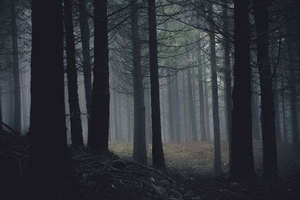 Nuno Andrade Mystical Dark Woods