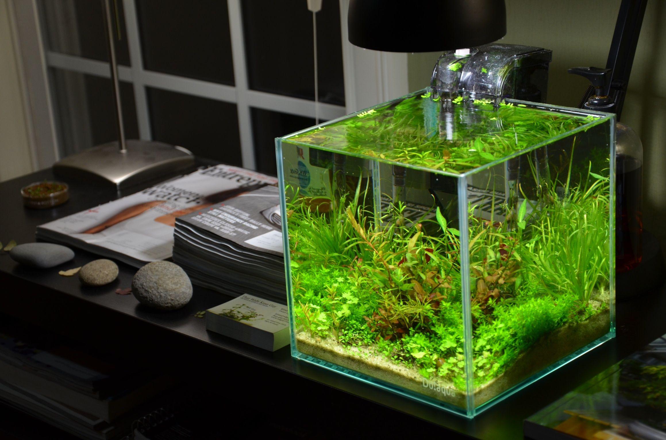 Freshwater aquarium fish ecosystem - Cubes