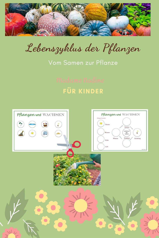 Pflanzen und Wachsen Arbeitsblatt für Kinder – Unterrichtsmaterial ...