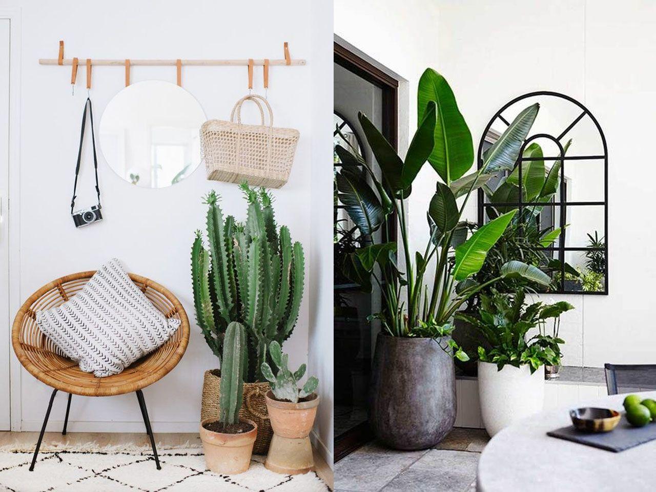 La mejor decoraci n tropical para el sal n color y for Plantas salon decoracion