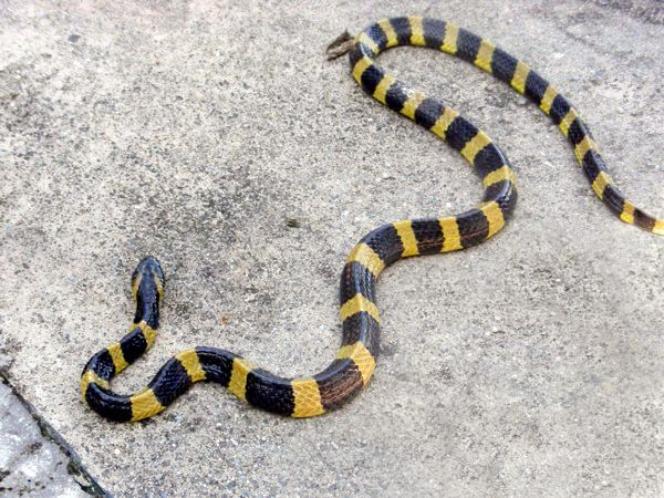 10 Most Dangerous Animals In The World Snake
