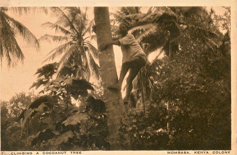 Coconut Picker Mombasa c1910